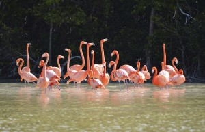 view of pink flamingos